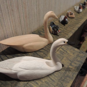Featured Highlight Swans